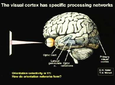 Обосновать психика это свойство мозга и способность отражать внешний